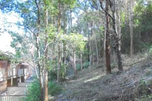 NSW Rural Fire Service – Hazard Reduction Notice – Albert Street, Ourimbah